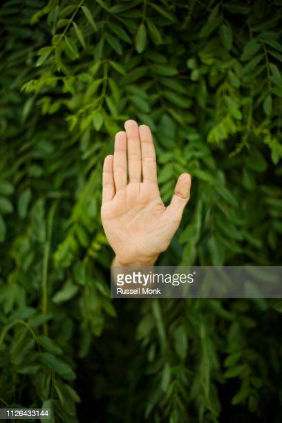 hand in a bush - environmental signs and symbols stock pictures, royalty-free photos & images