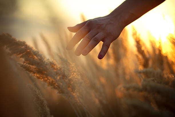 Hand in a field