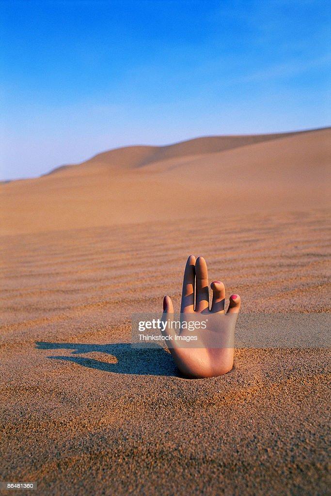 Hand in desert : Stock Photo