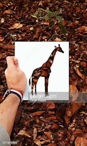 hand made silhouettes painted with real backgrounds - arte ストックフォトと画像