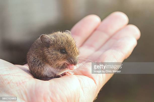 hand mouse - cute mouse stock pictures, royalty-free photos & images