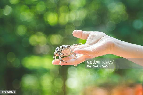 Hand Of A Child Holding Cute Frog Outdoors