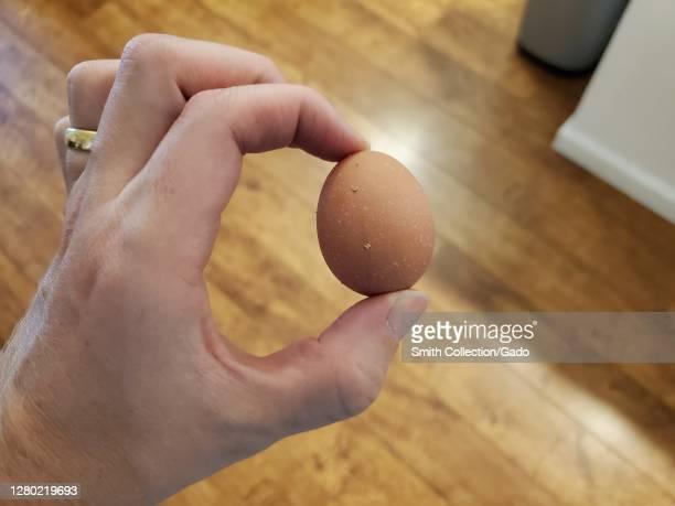 Hand of a man holding egg laid for backyard chickens, San Ramon, California, September 28, 2020.