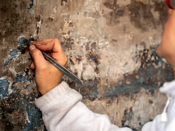 Hand of a restorer woman with his work tool, working on a wall.