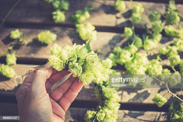 Hand of a woman making a hop wreath