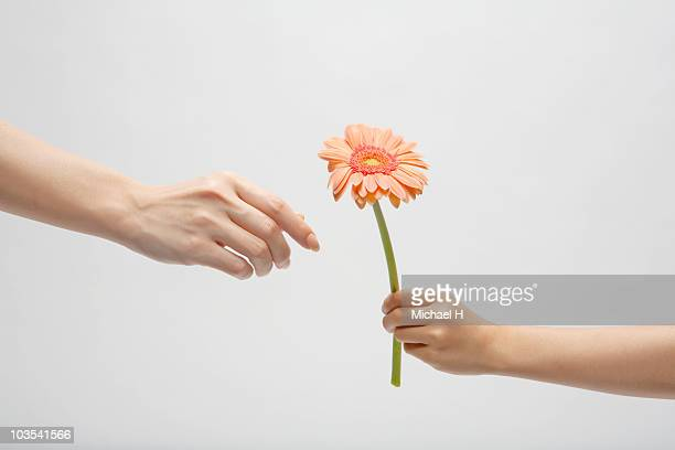 hand of child who passes mother flower - single flower stock pictures, royalty-free photos & images