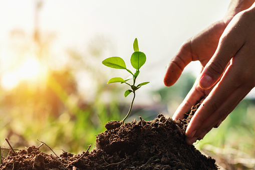 hand of children planting small tree in garden with sunset. concept green world 937291400