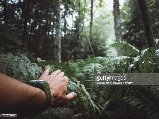 hand of man on fern in forest - exploration stock pictures, royalty-free photos & images