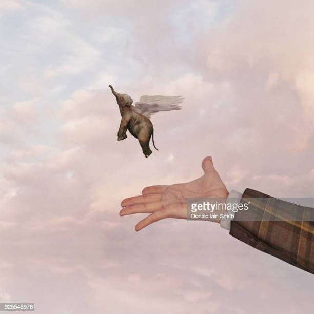 hand of man releasing flying baby elephant - releasing stock pictures, royalty-free photos & images