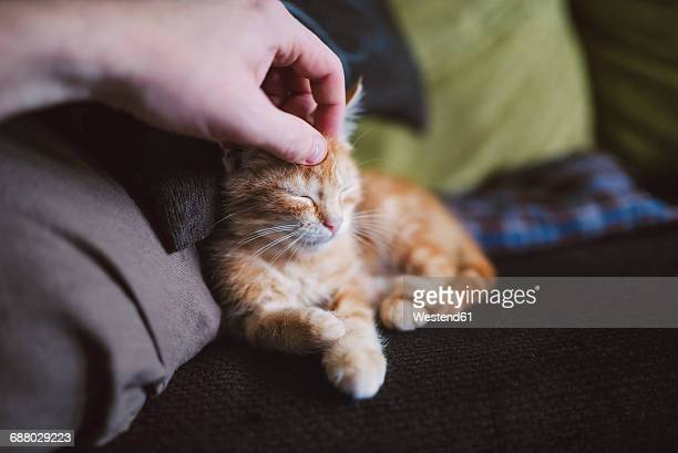 Hand of man stroking kitten