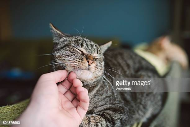 hand of man stroking tabby cat - aaien stockfoto's en -beelden