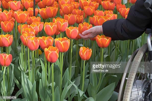 Hand of senior woman in wheelchair touching orange flower (XXXL)