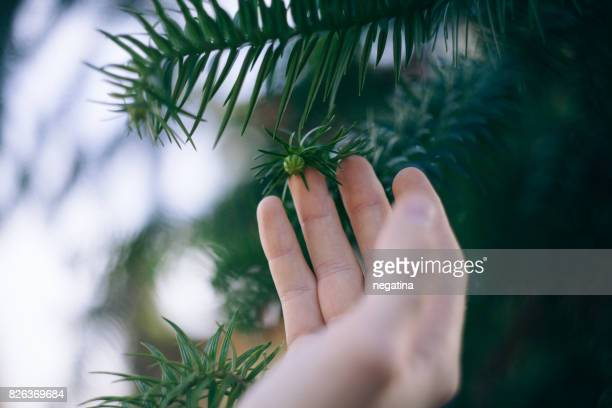 hand of young man touching little fresh green cone
