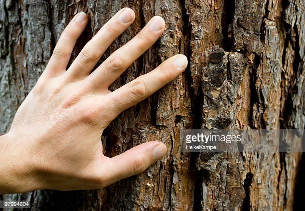 Hand auf Baumrinde.