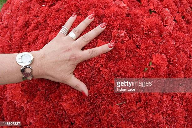 Hand on red carnation ball during Madeira Flower Festival.