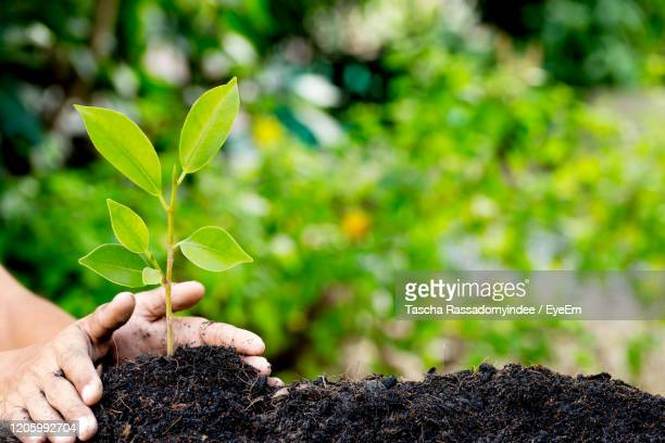 hand protection money coins like growing graph,plant sprouting from the ground - giornata mondiale della terra foto e immagini stock