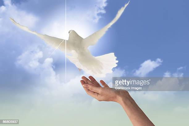 hand releasing a dove - releasing stock pictures, royalty-free photos & images