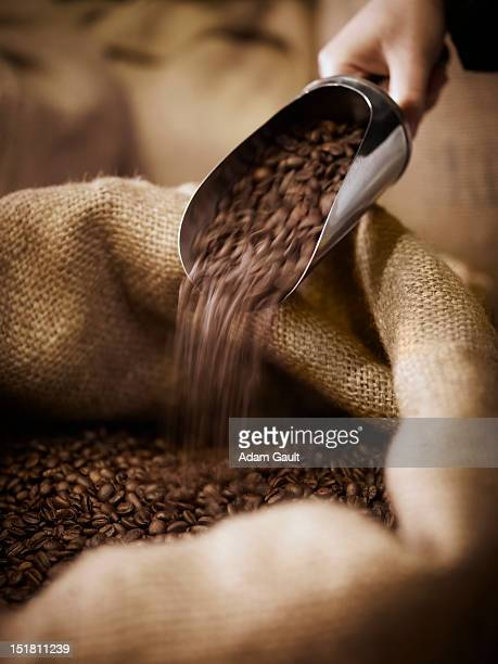 Hand scooping coffee beans in burlap sack