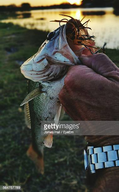 hand showing off caught fish - san angelo texas stock pictures, royalty-free photos & images