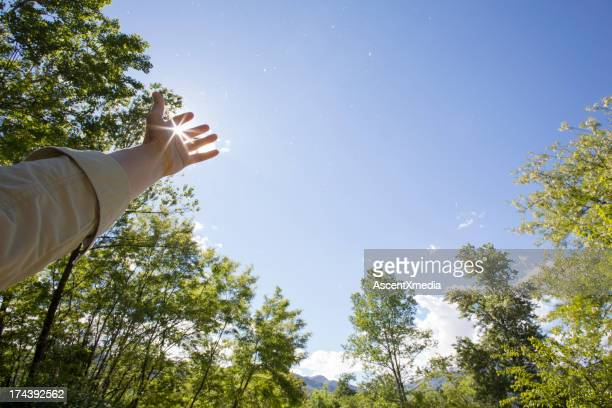 Hand stretching up to cup sun's rays, trees above