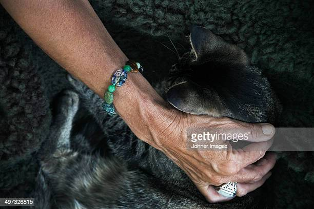 Hand stroking cat, close-up