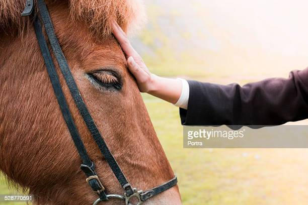 Hand stroking horse on field