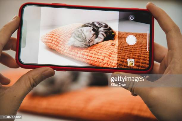 hand taking photo of a tabby cat napping - photographing stock pictures, royalty-free photos & images