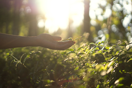 hand touch small plant - gettyimageskorea