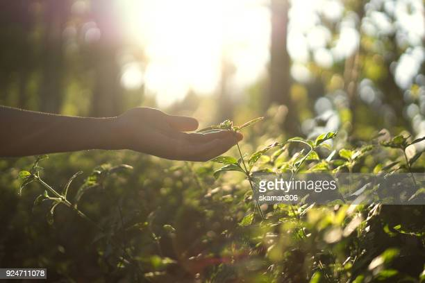hand touch small plant - environmental conservation stock photos and pictures
