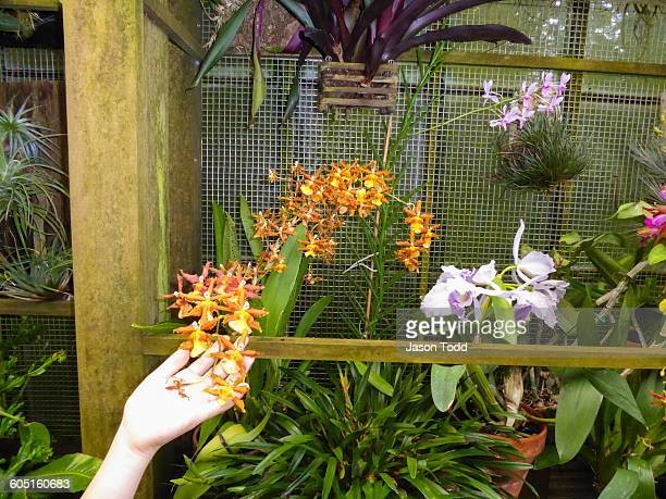 Hand touching plants on vertical garden