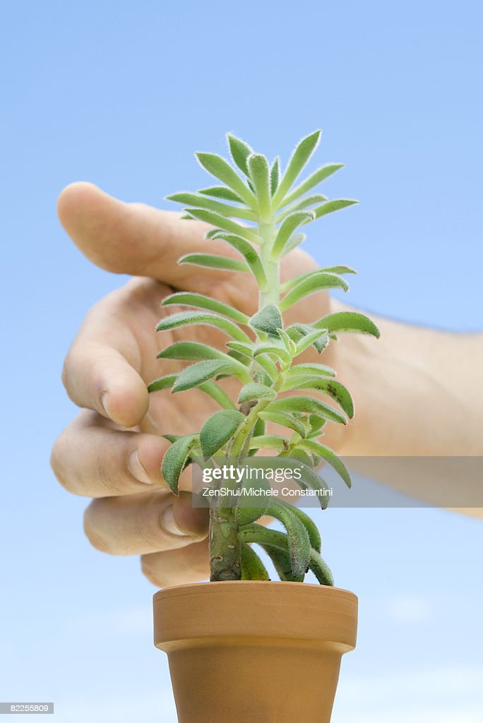 Hand touching succulent plant : Stock Photo