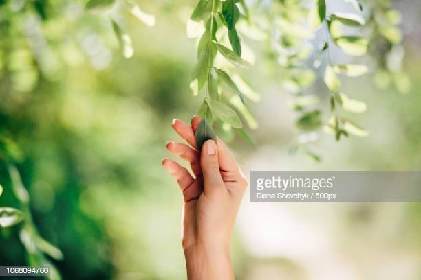 hand touching tree leaves - nature stock pictures, royalty-free photos & images