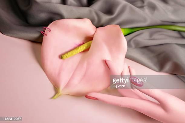 hand with calla lily - intim piercing stock-fotos und bilder