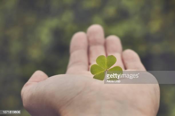hand with clover - clover foto e immagini stock