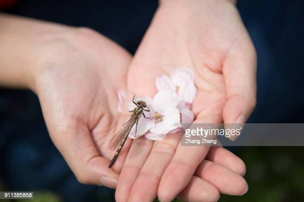 Hand With Dragonfly and flowers
