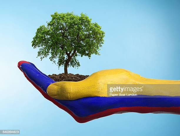 hand with flag of colombia holding a tree - bandera colombiana fotografías e imágenes de stock