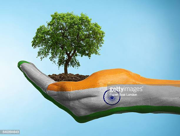 hand with flag of india holding a tree - indian flag stock pictures, royalty-free photos & images