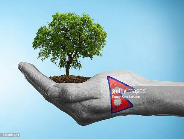 hand with flag of nepal holding a tree - nepali flag stock pictures, royalty-free photos & images