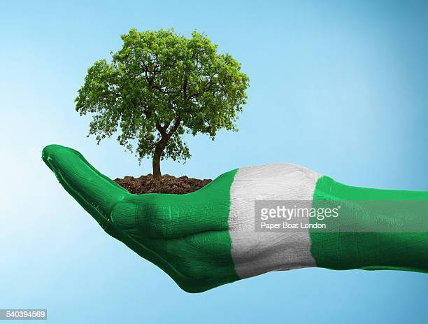 hand with flag of nigeria holding a tree - nigerian flag stock photos and pictures