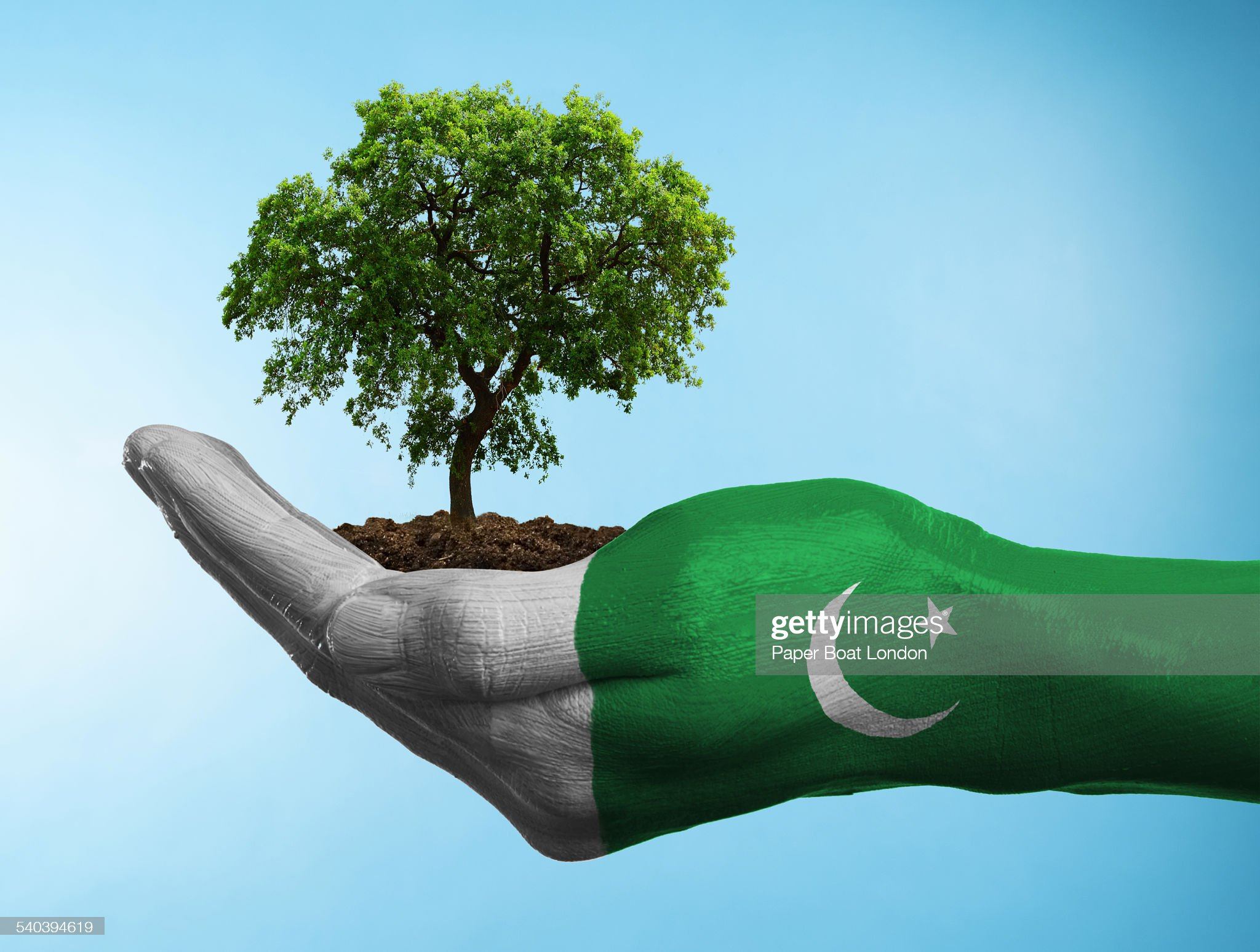Hand with flag of Pakistan holding a tree : Stock Photo