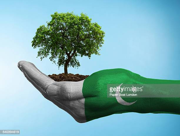 hand with flag of pakistan holding a tree - pakistani flag stock photos and pictures