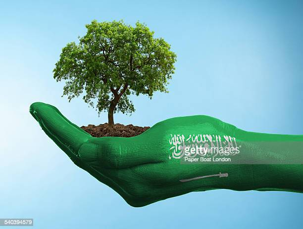 hand with flag of saudi arabia holding a tree - saudi arabian flag stock photos and pictures