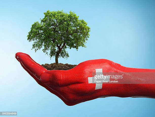 Hand with flag of Switzerland holding a tree