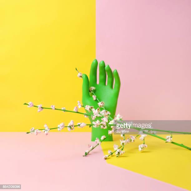 hand with flowering popcorn - nature morte photos et images de collection