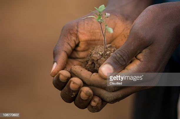 Hand with tomato plant,