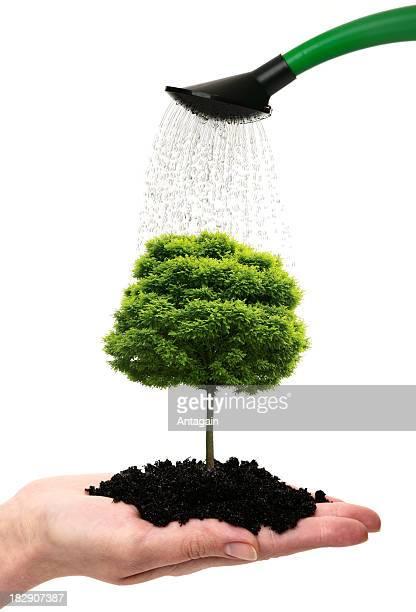 手でツリー - 栽培する ストックフォトと画像
