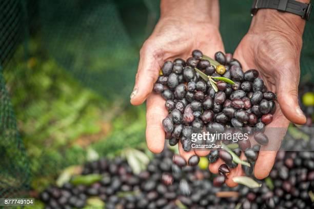 Handful of Black Olives