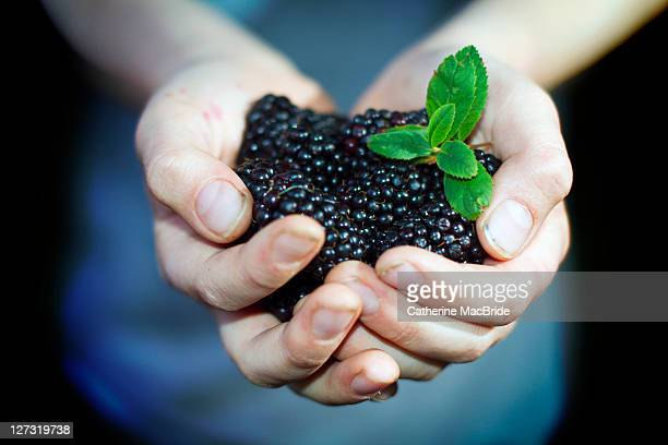 handful of blackberries - catherine macbride stock pictures, royalty-free photos & images