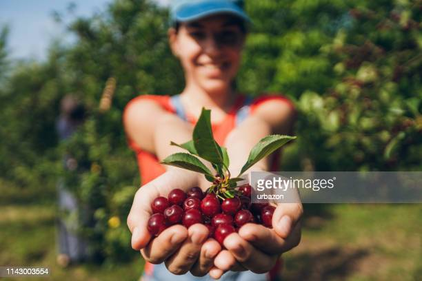 handful of cherry fruit - handful stock pictures, royalty-free photos & images