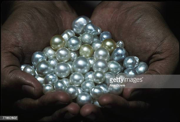 A handful of cultured South Sea pearls at a pearl farm in Phuket southern Thailand 12th September 1982